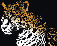 animal,jaguar,animal
