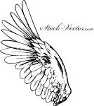 wing,fly,feather,angel,flying,hand drawn
