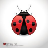 animal,art,beetle,bird,bug,character,color,colorful,cute,drawing,illustration,insect,lady,ladybird,ladybug,life,little,natural,nature,red,small,spotted,wild,wildlife