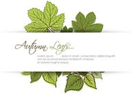 autumn,background,border,card,copyspace,floral,flyer,foliage,frame,green,greeting,halftone,invitation,leaf,line,maple,nature,ornament,ornamental,stain,text,vector,white