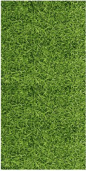background,biological,field,garden,grass,green,growth,illustration,life,natural,organic,organism,pattern,plant,rugged,sport,texture,textured,turf,vegetable,vitality,yard