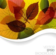 autumn,background,green,leaf,nature,template
