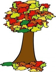 fall,coloured,tree