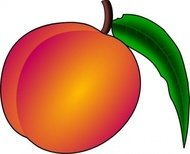 coredump,peach,colour,fruit,nectarine,nature,food,media,clip art,public domain,image,png,svg