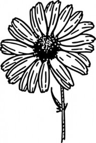 daisy,nature,plant,flower,aster,biology,botany,gardening,line art,season,spring,black and white,contour,outline,media,clip art,externalsource,public domain,image,png,svg,wikimedia common,psf,wikimedia common