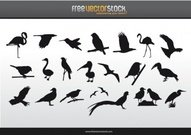 collection,bird,silhouette