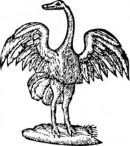 bird,engraving