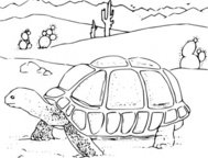 coloring,book,desert,tortoise,line art,animal,reptile,colouring book,media,clip art,externalsource,public domain,image,png,svg