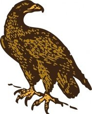 golden,eagle,animal,bird,media,clip art,externalsource,public domain,image,png,svg