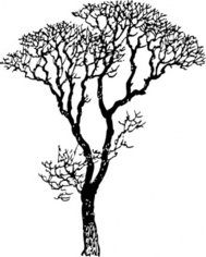 bare apple tree clipart. bare tree clip art apple clipart