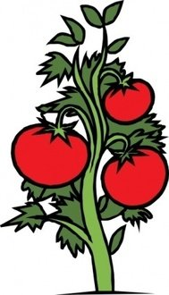 tomato,plant,vegetable,food,media,clip art,externalsource,public domain,image,svg