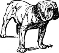 bulldog,animal,mammal,pet,dog,biology,zoology,line art,black and white,contour,outline,media,clip art,externalsource,public domain,image,png,svg,wikimedia common,psf,wikimedia common
