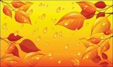 leaf,water,natural,nature,leaf,yellow,dried,sun,drop,droplet,dew,object,misc,illustration,autumn
