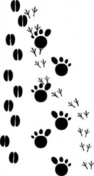 footprint,animal,bird,foot,paw,print,snow,black and white