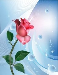 rose,blue,background,water,bubble