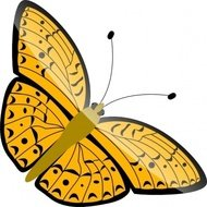 butterfly,nature,insect,animal