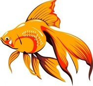 golden,fish,animal,pet,goldfish