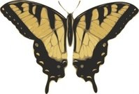 butterfly,view,papilio,turnus,top,media,clip art,externalsource,public domain,image,svg,png