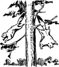 flying,squirrel,animal,rodent,tree