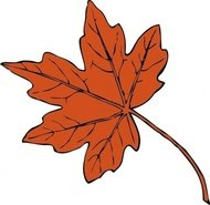 maple,leaf,plant,externalsource