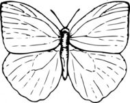 butterfly,black and white,animal,insect,biology,zoology,entomology,line art,outline,contour,media,clip art,externalsource,public domain,image,svg,wikimedia common,psf,wikimedia common