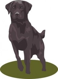 black,animal,dog,puppy,mammal,pet,lab,retriever