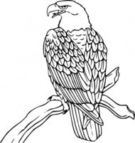 bald,eagle,animal,bird,colouring book,outline,nature,externalsource