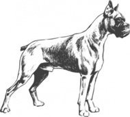 boxer,animal,mammal,pet,dog,dog breed,biology,zoology,line art,conotue,outline,greyscale,black and white,media,clip art,externalsource,public domain,image,png,svg,wikimedia common,psf,wikimedia common