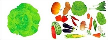 vector,fruit,vegetable