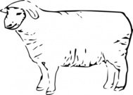 single,sheep,animal,outline,colouring book,farm,externalsource