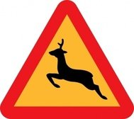 warning,deer,road,sign