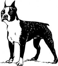 boston,terrier,animal,mammal,pet,dog,dog breed,boston terrier,biology,zoology,line art,black and white,contour,outline,media,clip art,externalsource,public domain,image,png,svg,wikimedia common,psf,wikimedia common