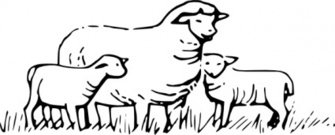 sheep,standing,animal,outline,colouring book,farm,externalsource