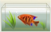 fish,tank,pez,aquarium,animal,color,media,clip art,public domain,image,png,svg,inkscape