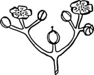 rose,flower,arrangement,nature,plant,part,inflorescence,biology,botany,line art,black and white,contour,outline,media,clip art,externalsource,public domain,image,png,svg,wikimedia common,psf,wikimedia common