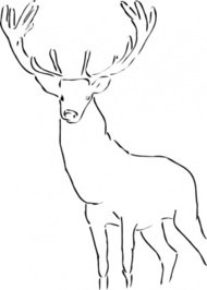 stag,animal,line art,nature,mammal,calligraphic,media,clip art,public domain,image,svg