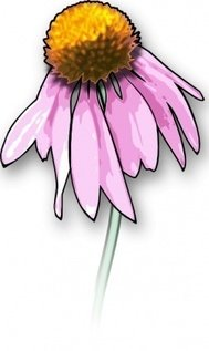 dead,flower,purple cone flower,echinacea,colour,nature,media,clip art,public domain,image,png,svg