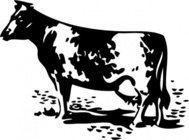 standing,animal,cow,outline,colouring book,farm