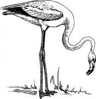 flamingo,black and white,line art,bird,media,clip art,externalsource,public domain,image,svg,wikimedia common,wikimedia common