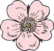 wild,rose,flower,plant,media,clip art,externalsource,public domain,image,png,svg