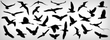 volant,ocell,diferents,natura,gavina,volar,on,flying bird,gavina,ocell