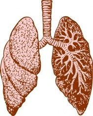 lung,anatomy,body,human,media,clip art,externalsource,public domain,image,png,svg,lung,lung