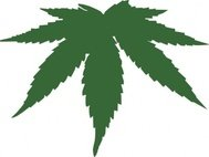 cannabis,feuille,section,plante
