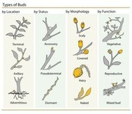 plant,bud,clasification,clip