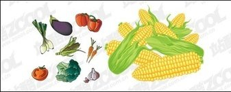 vector,material,common,fruit,vegetable