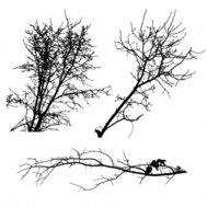 tree,silhouette,nature,_nature,withered,branch,material,box,corner