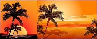 coconut,sunrise,affect,seaside,sunset,material