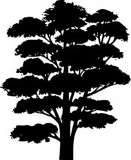 tree,silhouette,nature,element,illustration.black,shadow,shape