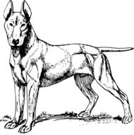 bull,terrier,animal,mammal,pet,dog,bull terrier,biology,zoology,line art,black and white,contour,outline