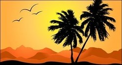 palm,tree,sunset,coconut,mountain
